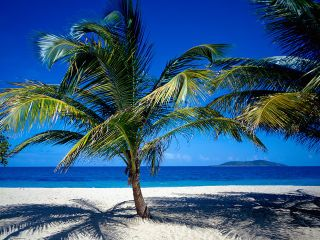 Us-virgin-islands-nature